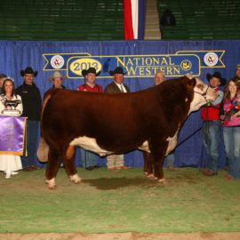 Hereford – Champion of the World 2013 – RST Time's A Wastin' 0124